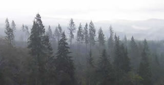 clatsop-state-forest
